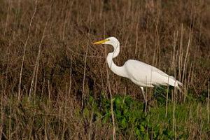 moving to Palo Alto, Baylands Nature Preserve