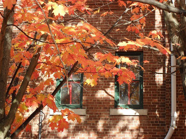 Autumn for Professional Bay Area Moving Company