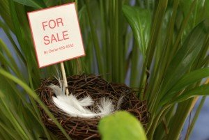 Birds Put Nest For Sale to Move in Spring