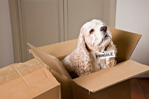 bay area, prohibited items, moving company, moving services, movers